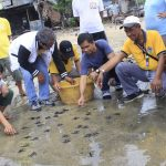 Sea turtle hatchlings were freed back to the sea in one of the coastal barangays in the municipality